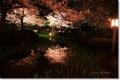 兼六園の夜桜 2008(その1)