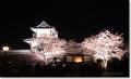 兼六園の夜桜 2008(その2)